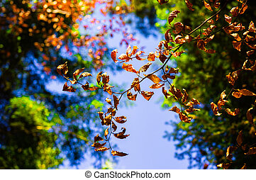 Branch of dry leaves on a background  blue sky.