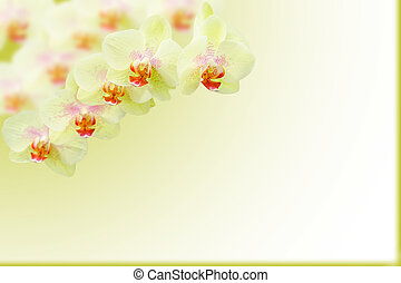 Branch of exotic green orchids on gradient