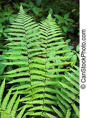 Branch of fern in summer forest