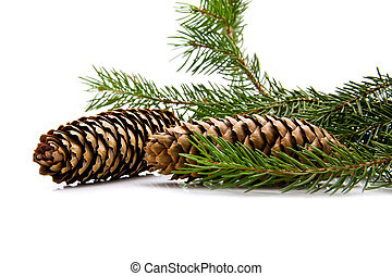 branch of fir-tree and cone on a white background