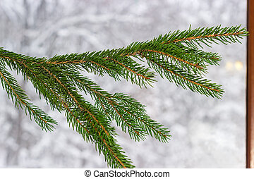 Branch of fir tree indoors on blurred background of window