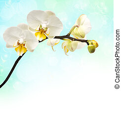branch of flowering orchids