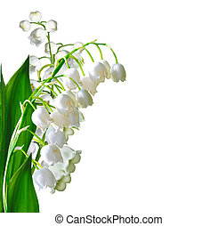 lily of the valley - branch of flowers lily of the valley ...