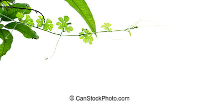 Branch of green plant isolated on white background