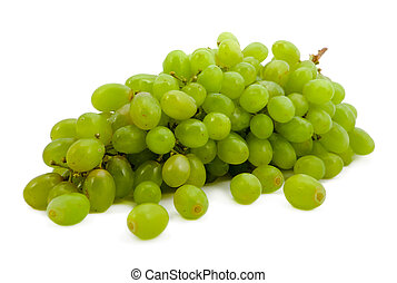 branch of green vine on a white background