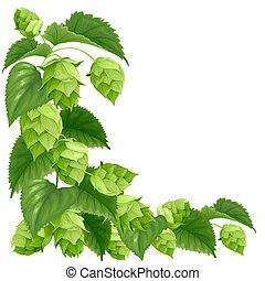Branch of hops isolated on white background