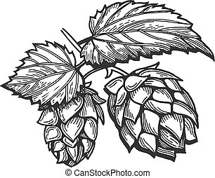 branch of hops with leaves