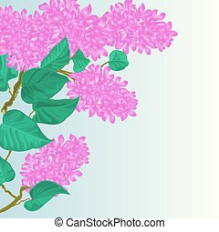 Branch of lilac with flowers