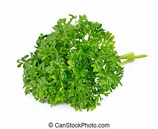 Branch of magnificent parsley