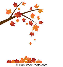 Branch of maple tree, autumn leaf fall. Vector