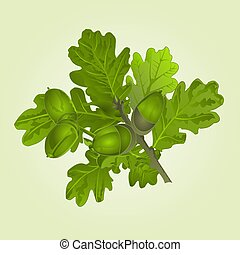 Branch of oak with acorns and leaves natural background vector