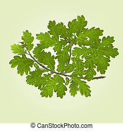 Branch of oak with acorns natural background