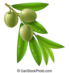 Branch of olive tree with green olives and leaves with drops...