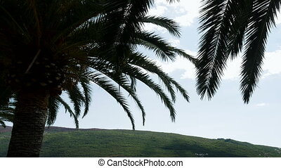 branch of palm trees swaying in the wind in Sunny Montenegro...