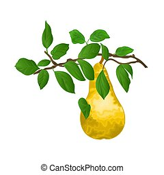 Branch of pears with yellow ripe pear vector