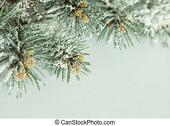 Branch of pine tree with snow effect on white background