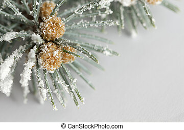 Branch of pine tree with snow on white background