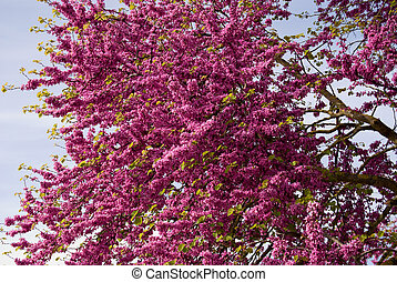Branch of pink flowers