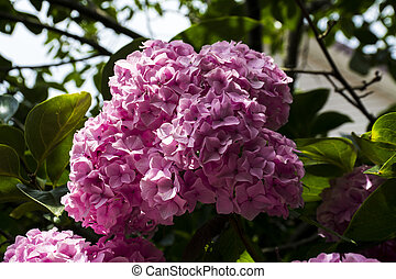 branch of pink lilac background