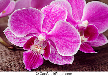 branch of pink orchids  on wooden background
