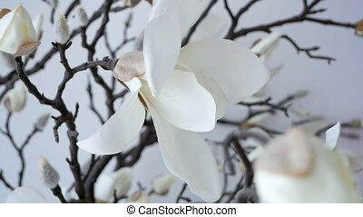 Branch of pure white orchid