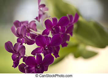 Branch of purple orchids with a natural background