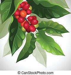 coffee - branch of ripe coffee