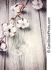 Branch of ripe cotton bolls on old wood background