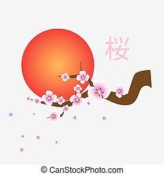 Branch of sakura blossoms