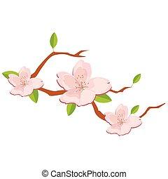 Branch of sakura flowers