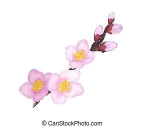 Branch of Sakura or Cherry Blooming Flowers Vector