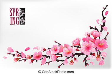 Branch of sakura or cherry blossom