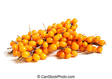 Branch of sea-buckthorn berries on white background