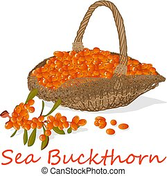 Branch of sea buckthorn berries with leaves in the basket. Vector illustration set on white background.