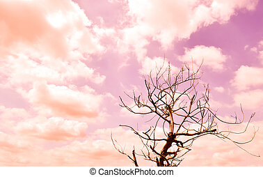 Branch of single die tree in blue sky and white cloud in Thailand.