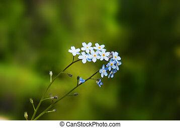 small beautiful blue flowers