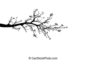 Branch of spring tree isolated on white background