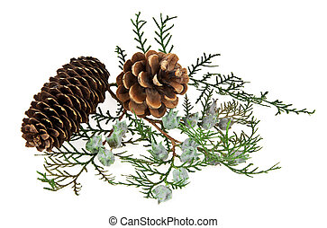 branch of spruce and pine cone