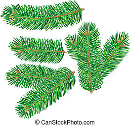 Branch of spruce. Contains transparent objects. EPS10