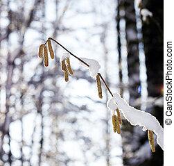 Branch of the birch
