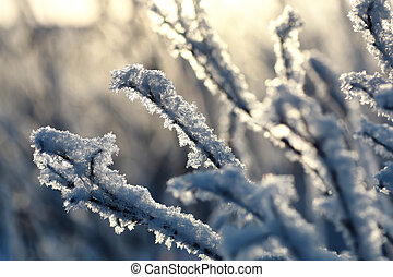 branch of the plant covered with snow winter macro