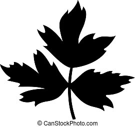 Branch of three leaves of lovage