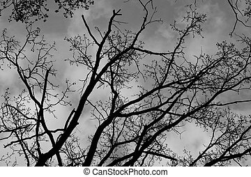 branch of tree against the sky with clouds