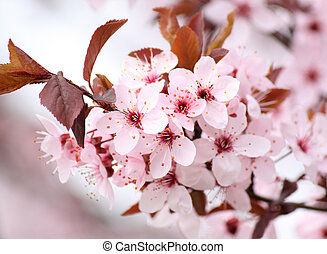pink blossom - branch of tree with pink blossom