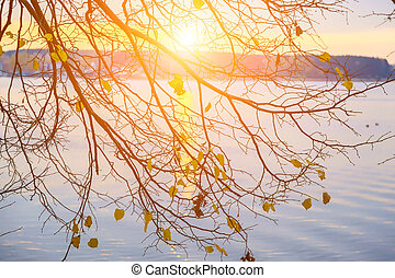 Branch of Tree with Sunset Over Lake