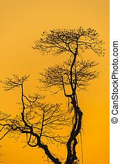 Branch of tree with sunset