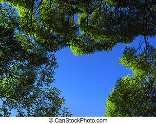 branch of trees on blue sky background