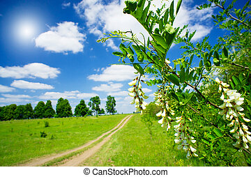 Branch of white acacia and beautiful rural landscape. - ...