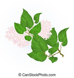 Branch of white lilac flowers vector