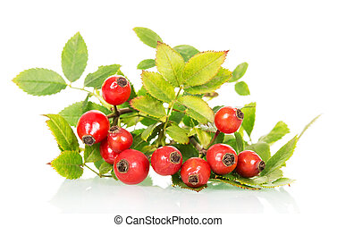 branch of wild rose with green leaves and ripe berries close-up on white